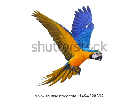 Colorful flying parrot isolated on white