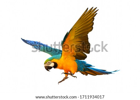 Colorful flying parrot isolated on white Foto stock ©
