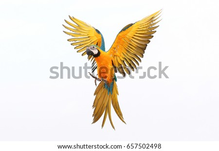 colorful flying parrot isolated ...