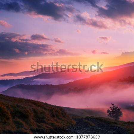 colorful foggy dawn picture in summer mountains, morning fog in charming light rising sun, wallpaper background image, attractive nature scene, location Ukraine, east Europe, Carpathians