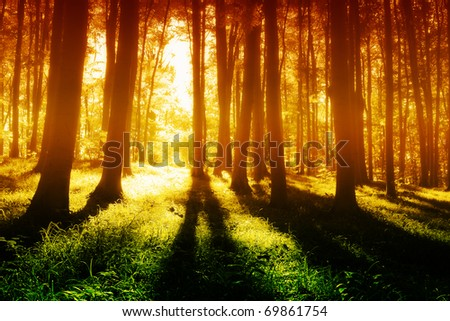 Colorful  foggy, mystical forest  at evening