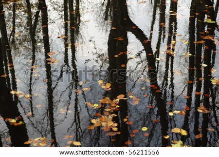Colorful foliage floating in the dark fall water with reflection of the trees.