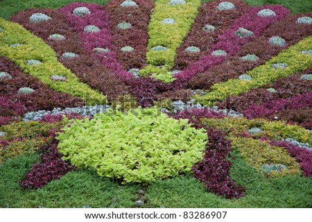 Colorful foliage in formal garden (Alternanthera ficoidea,joyweed ,sedum, echevaria elegans)