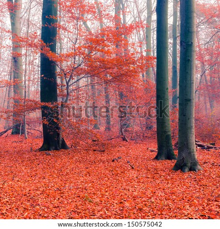 Stock Photo Colorful foliage in the autumn forest