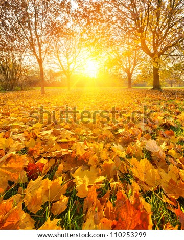 Colorful foliage in the autumn park stock photo