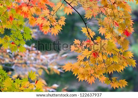 Colorful foliage in the autumn park Seoul #122637937