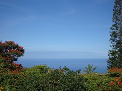 Colorful foliage on Kona (the Big Island of Hawaii) and scenic waterscape of the Pacific Ocean; great for background