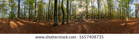 colorful forest at autumn 2019 Zdjęcia stock ©
