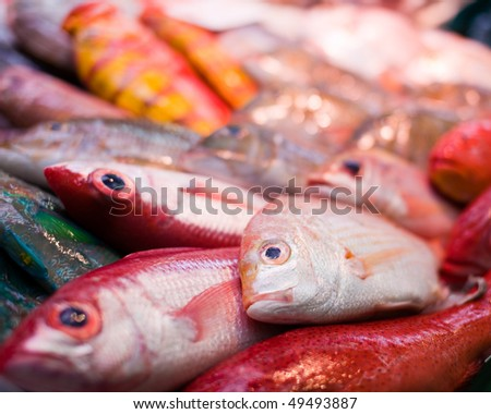 Colorful fresh tropical fish in the market, Okinawa, Japan