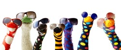Colorful fun sock puppets wearing glasses isolated against white background