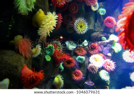 Colorful funny life underwater