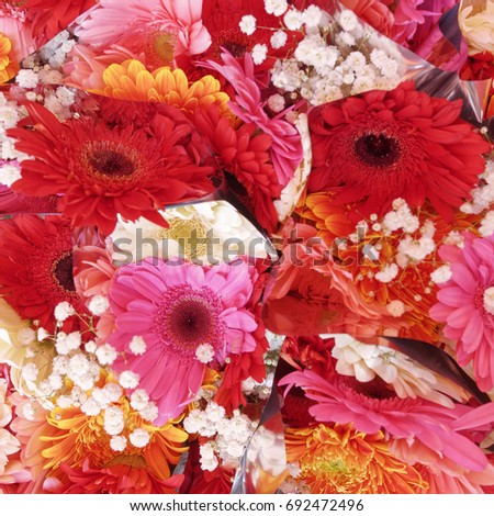 colorful Gerber flowers top view, natural background #692472496