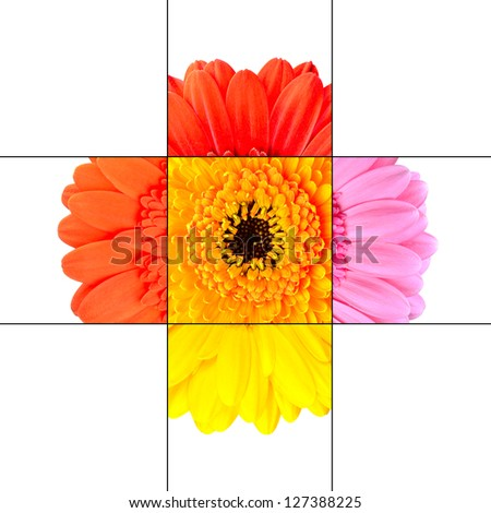 Colorful Gerbera Marigold Flower Mosaic Design Isolated on White Consisting of 9 Squares on 3x3 grid each with part of Gerbera Flower.