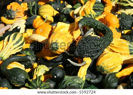 Colorful Gourds Signal the Fall Season
