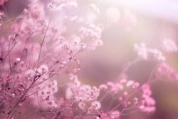 Colorful grass flower in soft and blur style for background