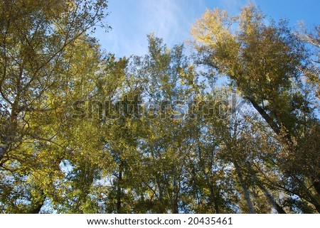 Colorful green and yellow treetops with skies on background