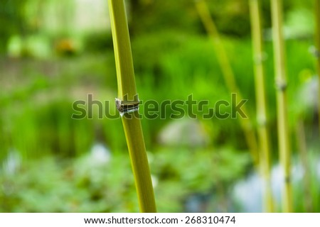 Colorful Green Bamboo Trees In A Japanese Garden. Rich green colors with lots of crisp detail.