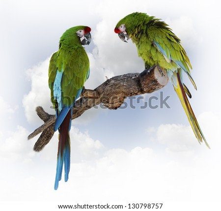 Colorful Green Parrot Macaw  On A Branch