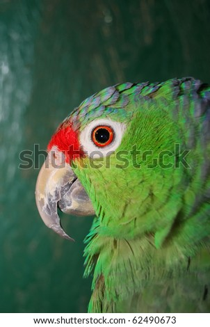 colorful green parrot sitting in cage