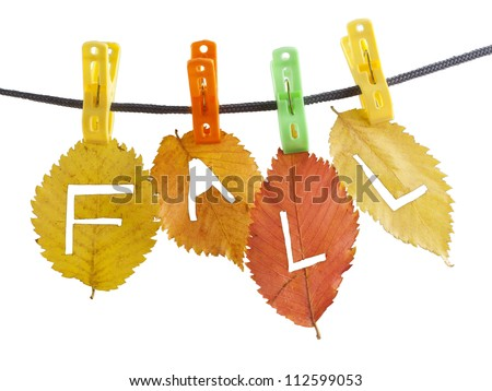 Colorful - green red yellow fall leaves hanged on clothesline with clips carved with a knife letters - F a l l  isolated on white background Sign idea symbol concept of autumn season