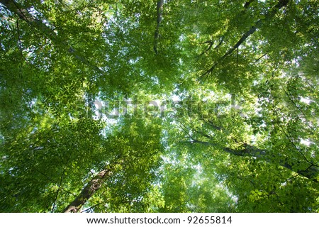 Colorful green treetops