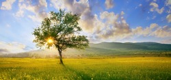 colorful HDR landscape tree in clear green and blue nature