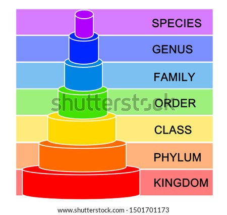Colorful Hierarchy of Biological Classification