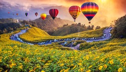 Colorful hot air balloons flying over Mexican sunflower Field with sunset, Mae Hong Son Province, Thailand.