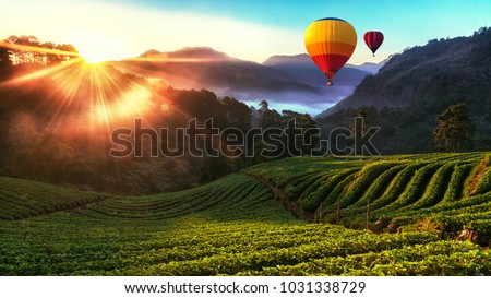Colorful hot-air balloons flying over strawberry garden with misty morning sunrise at Chiang Mai, Thailand.