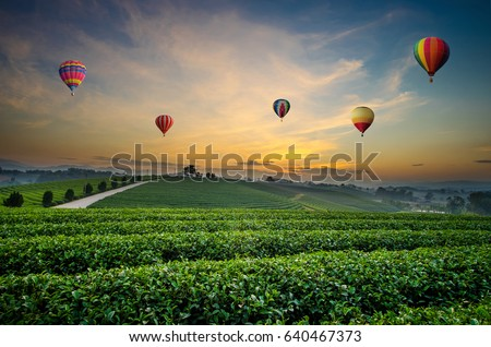 Colorful hot-air balloons flying over tea plantation landscape at sunset - Shutterstock ID 640467373