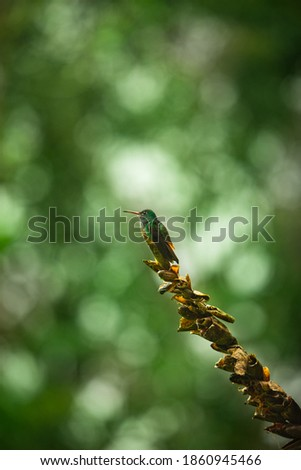 Colorful Humming Bird sitting on a Tree Branch, isolated with blurred Background and Copy Space stock photo