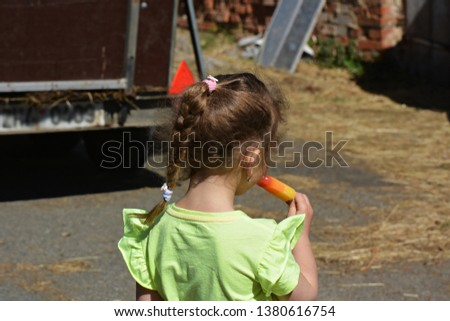 Colorful ice lolly in summer
