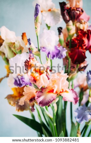 colorful iris flowers