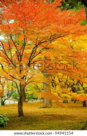 Colorful Japanese maple tree #94941154