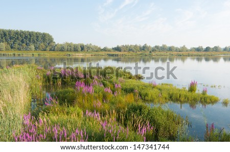 Colorful landscape in summer with a mirror smooth water surface and a large biodiversity.