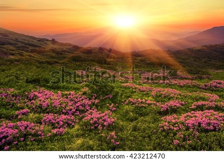 colorful landscape in the mountains, sunny morning panorama, sun rays warm up gentle mountain flowers - Shutterstock ID 423212470