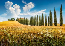 Colorful landscape of field of wheat with farmhouse and cypress trees. Colorful summer view of Italian countryside, Italy, Europe. Beauty of countryside concept background.