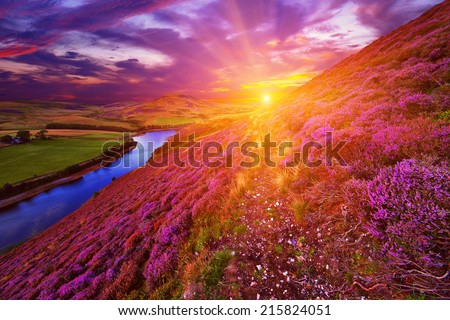Colorful landscape scenery with a footpath through the hill slope covered by violet heather flowers and green valley, river, mountains and cloudy blue sky on background. Pentland hills, Scotland #215824051