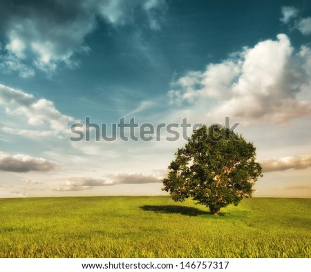 colorful landscape with field and tree #146757317