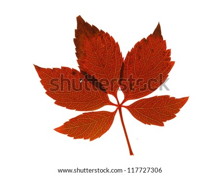 colorful leaf on isolated white background