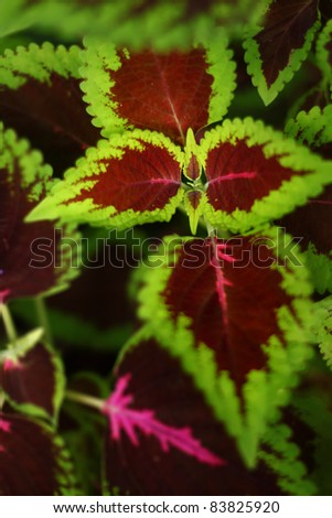 Colorful leafs with selective focus - stock photo