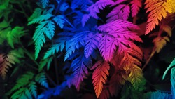 Colorful leaves background. Colorful foliage backdrop. Rainbow abstract pattern. Rainbow abstract background. Multicolor patterns. Multicolor abstract backdrop.