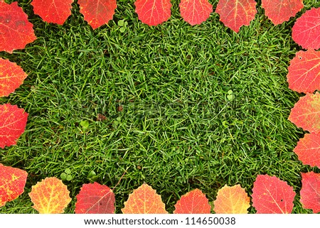 Colorful leaves frame on the green grass.