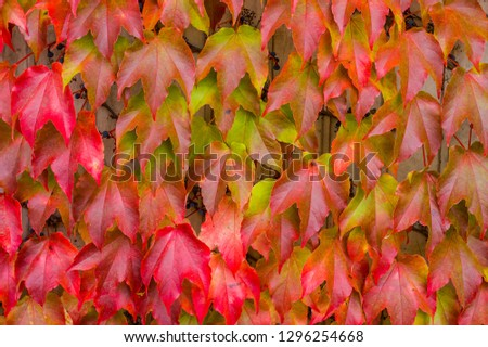 colorful leaves in the autumn
