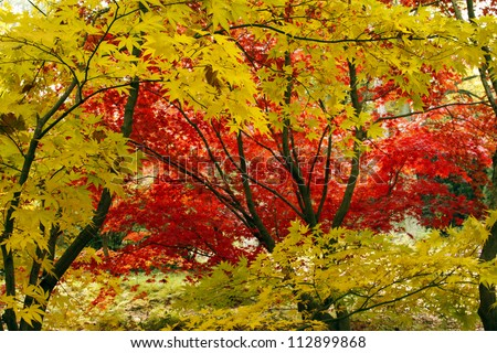 Colorful leaves in the park with autumn