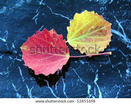 Stock Photo Colorful leaves isolated on stone with water drops