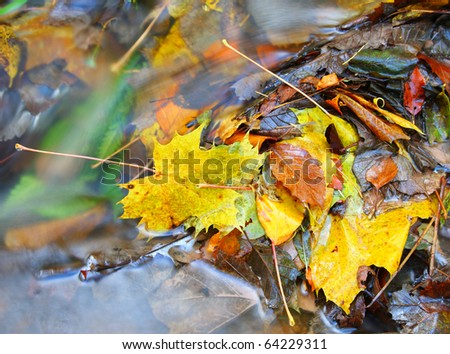 Colorful leaves lying in water