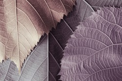 Colorful leaves of trees, abstract nature background