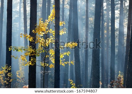 Colorful lonely tree in the forest in Autumn - stock photo