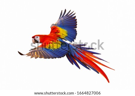 Colorful macaw parrot isolated on white background. Foto stock ©